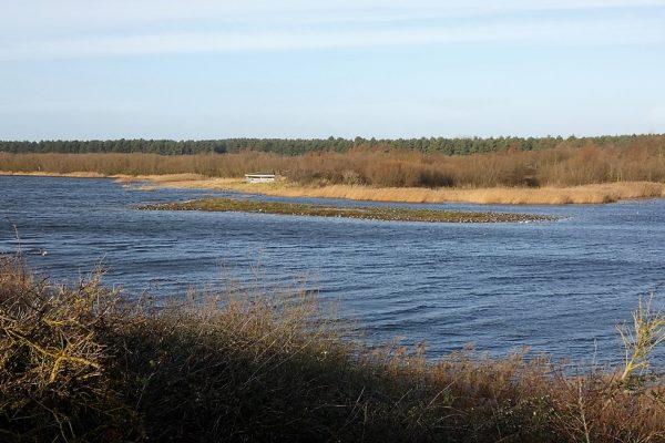 Depuis un observatoire un plan d'eau et îlot du parc